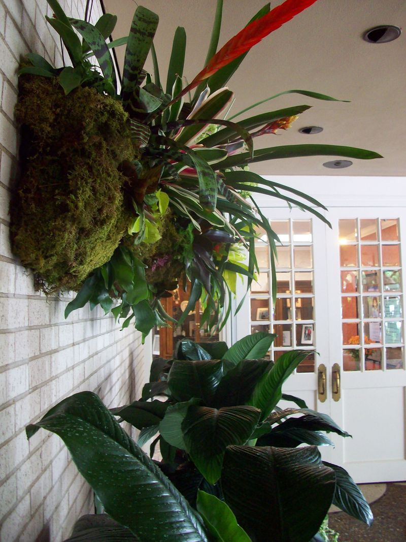 Orchid wall planter 1
